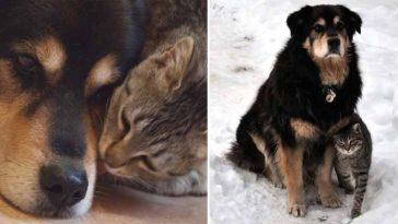 Gatinha de coração partido chora por semanas após perder melhor amigo