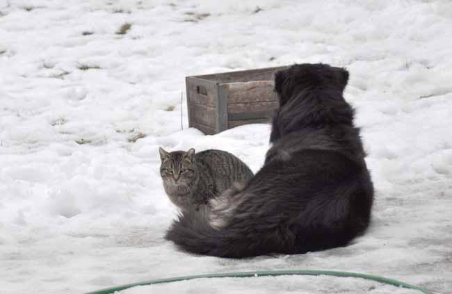 Gatinha-de-coração-partido-chora-cachorro
