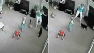 Gatinho ataca a babá ao achar que ela estava fazendo mal ao bebê