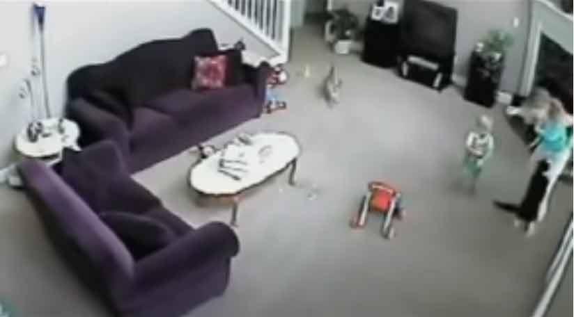 Gatinho-ataca-a-babá-ao-achar