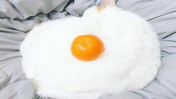 Gatinho branco com uma laranja