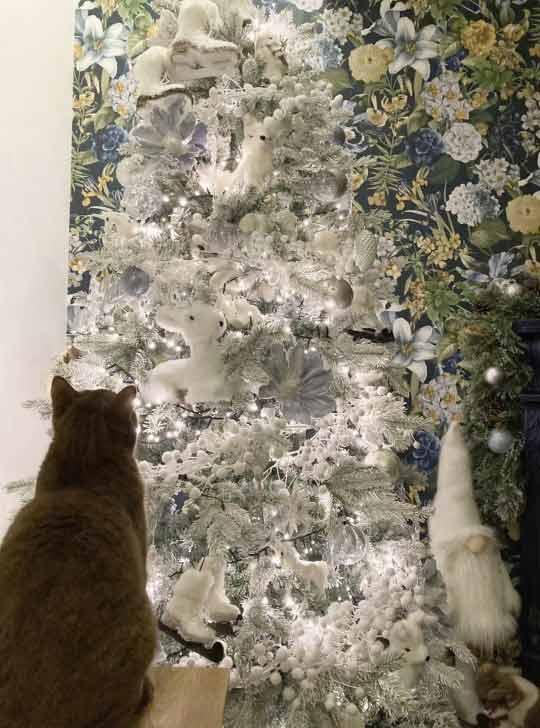 Gatinho-camuflado-em-árvore-de-Natal-foto