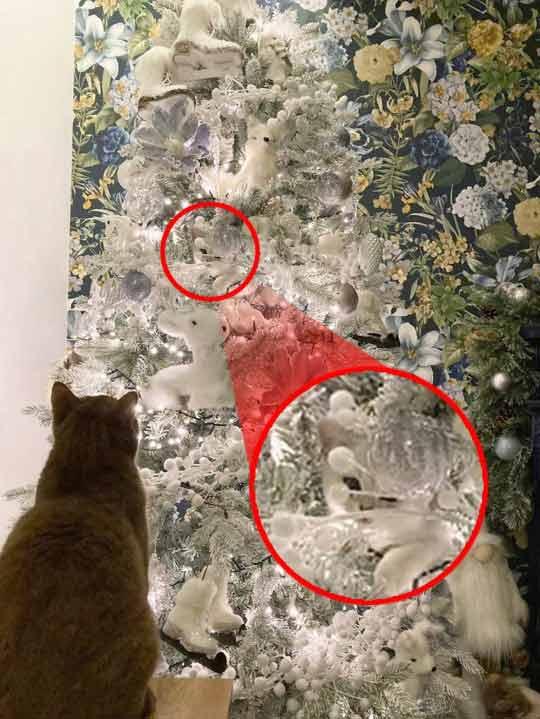 Gatinho-camuflado-em-árvore-de-Natal-fotos