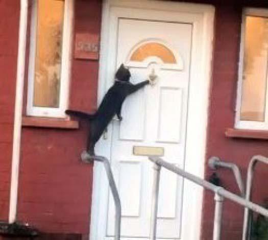 Gatinho mais educadobatendo na porta