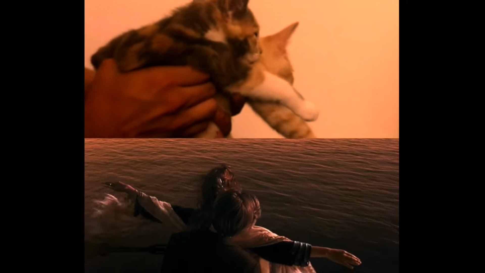 Gatinhos-protagonizam-Titanic