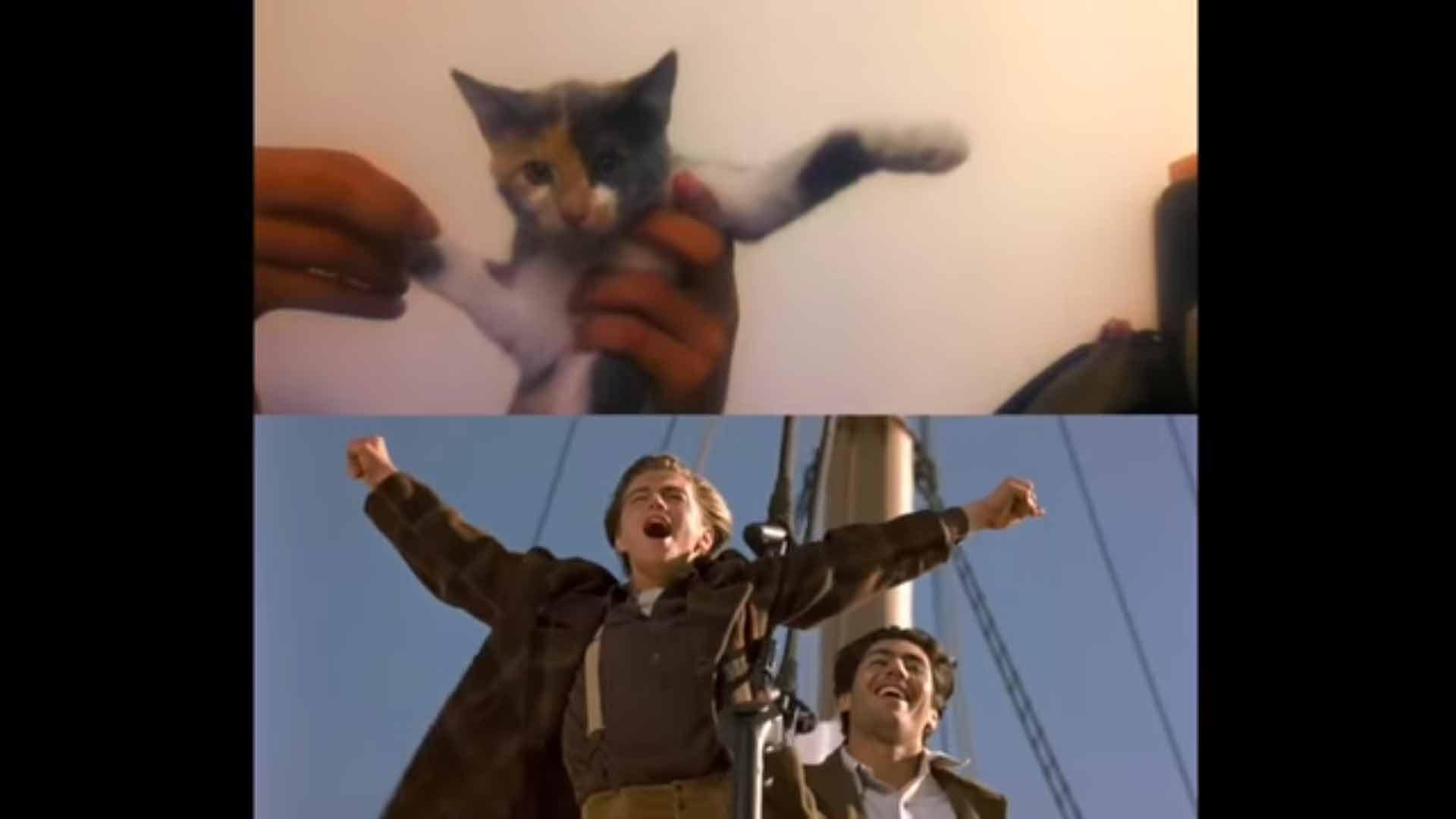 Gatinhos-protagonizam-cenas-de-Titanic