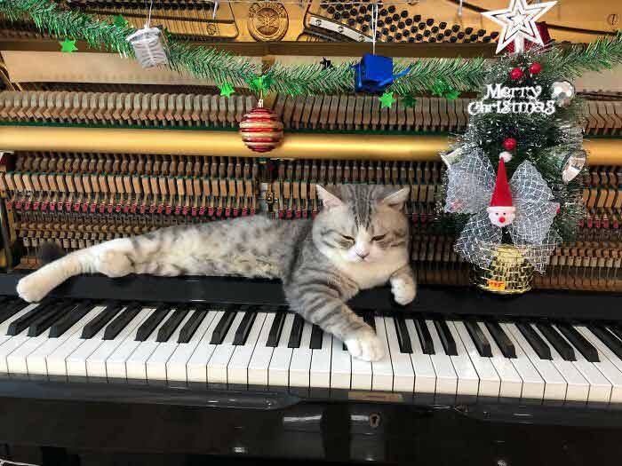 Gato-recebe-massagem-de-piano-enquanto-dono-toca