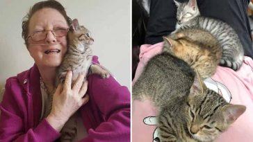 Idosa-com-doença-terminal-ganha-gatinhos