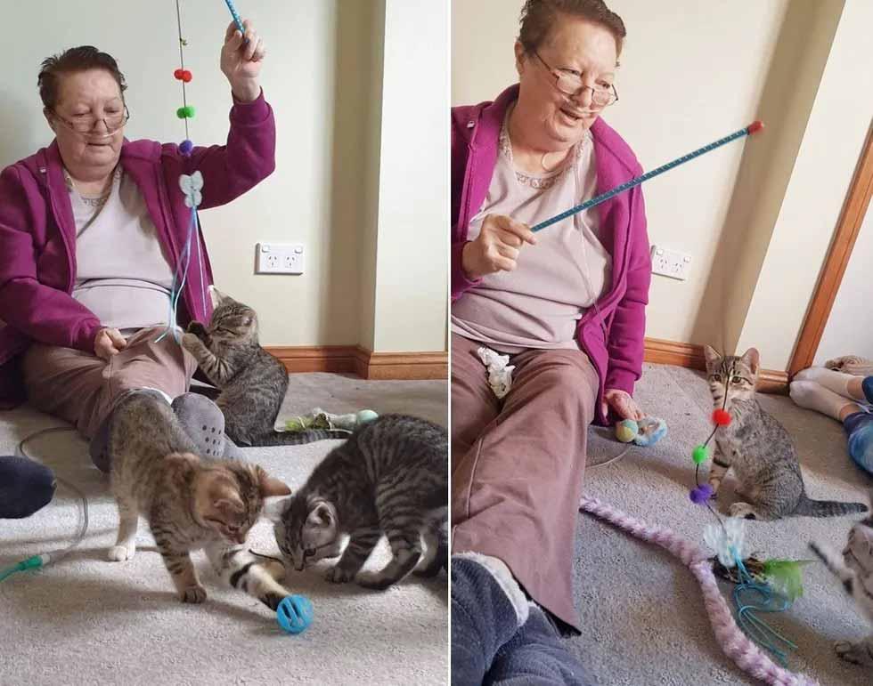 Idosa-com-doença-terminal-gatinhos