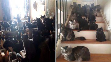Mais de 300 gatinhos em apartamento