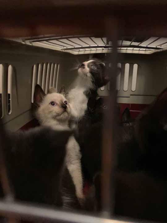 Mais de 300 gatinhos resgatados