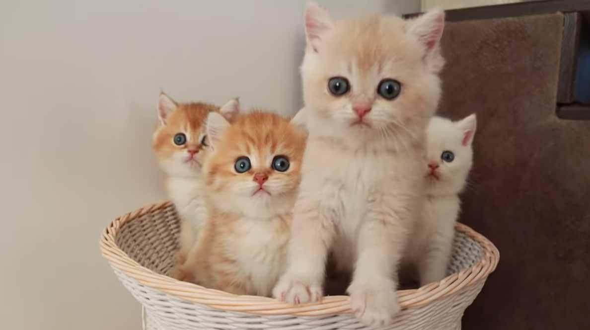 Mamãe-gatinha-tenta-organizar-filhotes-bagunceiros