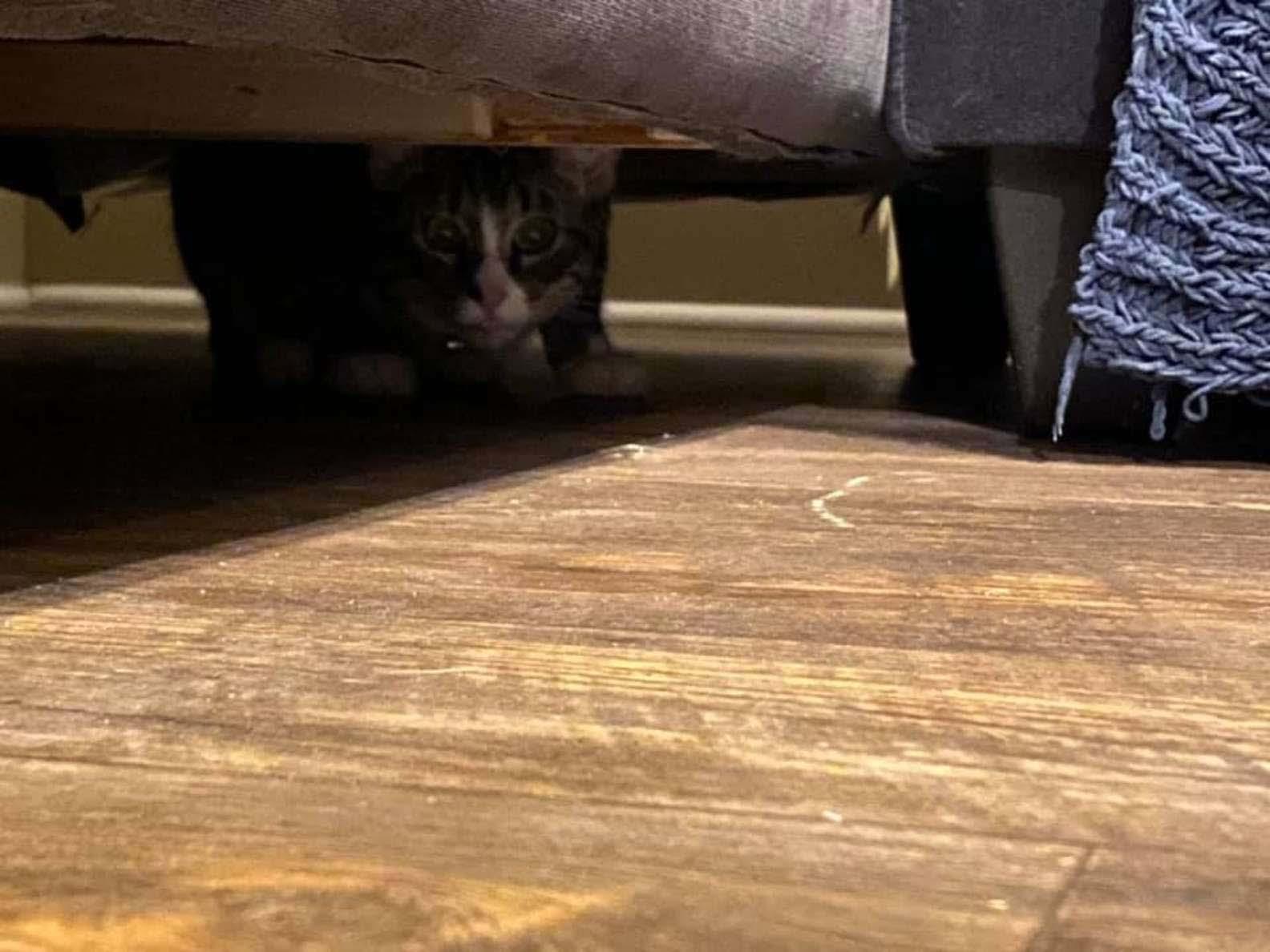 Mulher compra um sofá usado gatinho