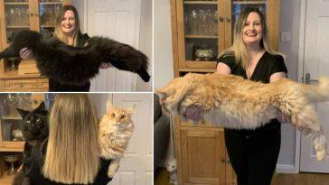 Mulher-posa-com-gatinhos-gigantes