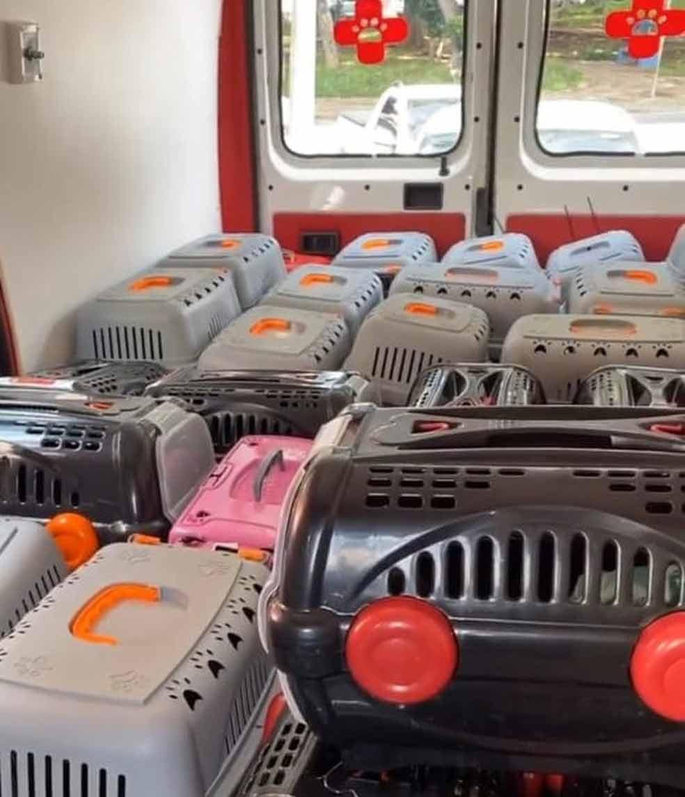 Van-com-70-gatinhos-resgatados-de-maus-tratos