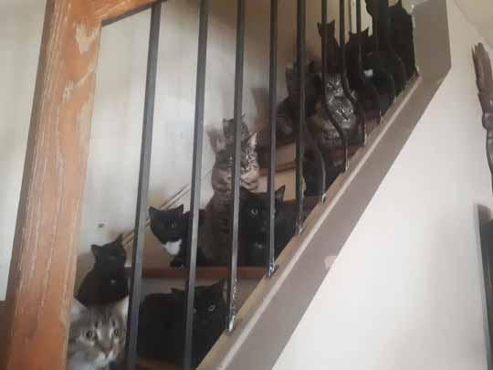 acumulação de gatos