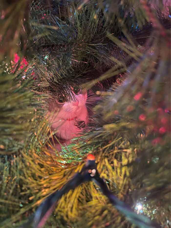 gatinhos-no-natal-árvore