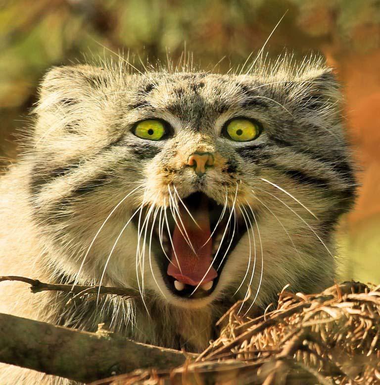 gatinhos selvagens