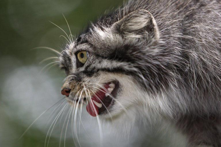 gatinhos silvestres