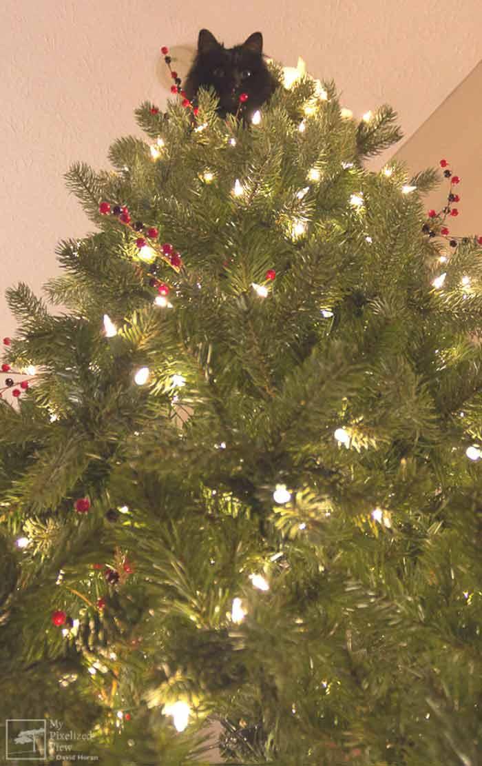 gatos-e-árvores-de-Natal