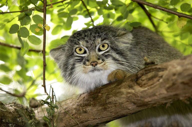 gatos super expressivos