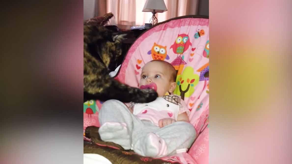 gatos-e-crianças