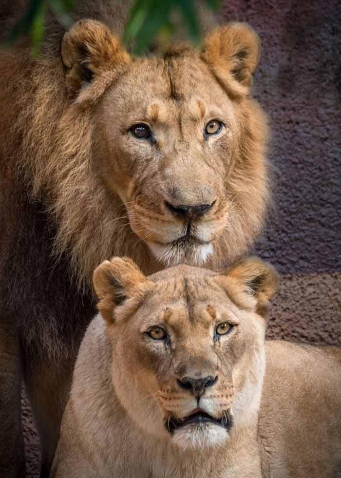 história-de-amor-no-mundo-animal
