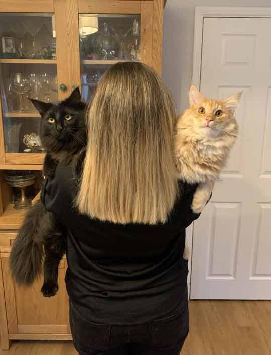 maiores-gatos-do-mundo
