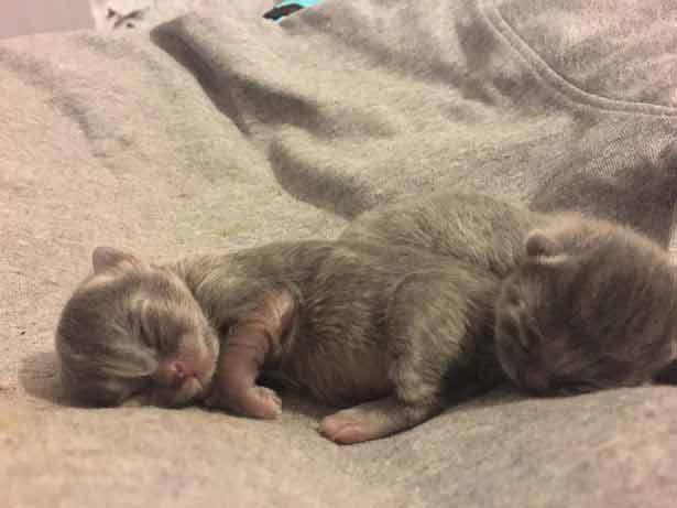 menores-gatinhos-do-mundo