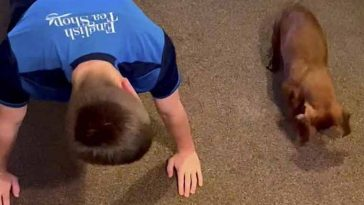 Cachorro salsicha adora fazer flexões ao lado do dono
