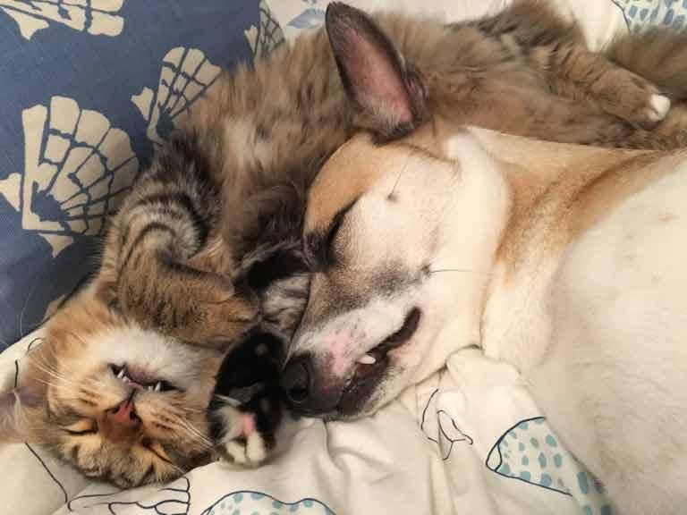 Cadela-ganhou-gatinho-ansiedade