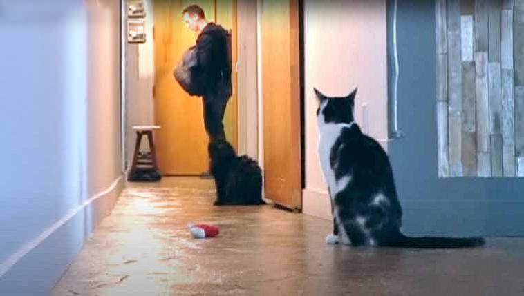Câmera-mostra-reação-de-gatinho