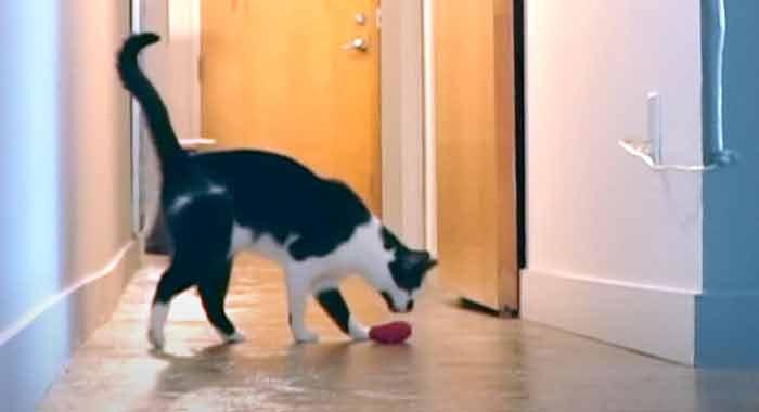 Câmera-mostra-reação-de-gatinho-sozinho