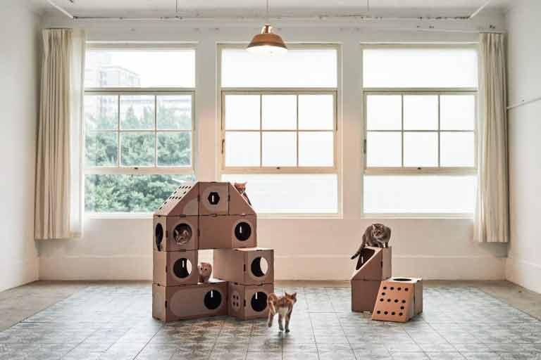 Cidade-de-papelão-gatinhos