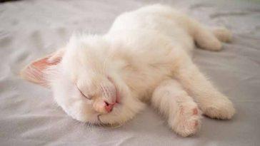 Com o que os gatos sonham? A ciência dá a resposta