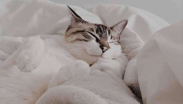Com-o-que-os-gatos-sonham-afinal