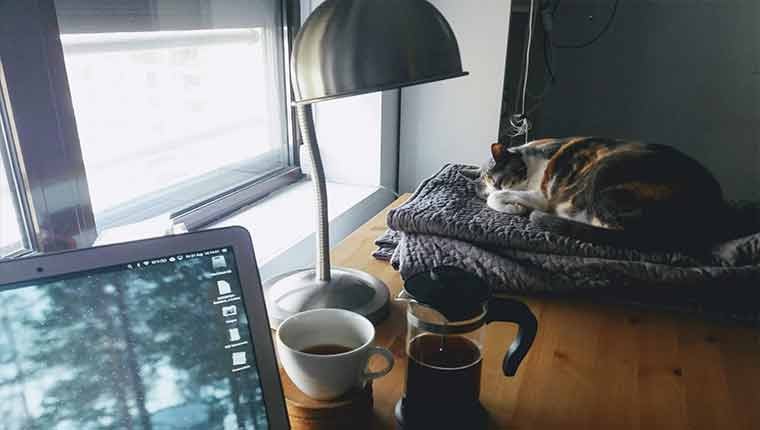 Com-o-que-os-gatos-sonham-ciência