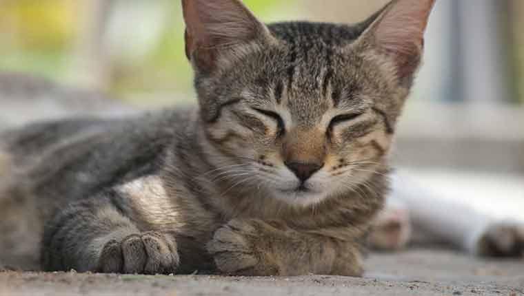 Com-o-que-os-gatos-sonham-fatos
