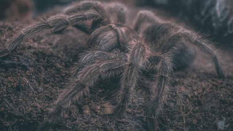 Como-afastar-aranhas-de-casa
