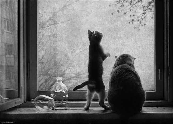 Confira-fotos-de-gatinhos-na-janela