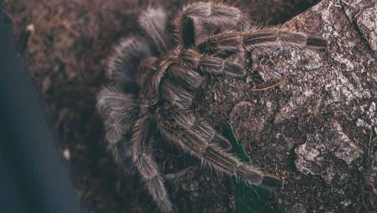 Curiosidades-sobre-aranhas-para
