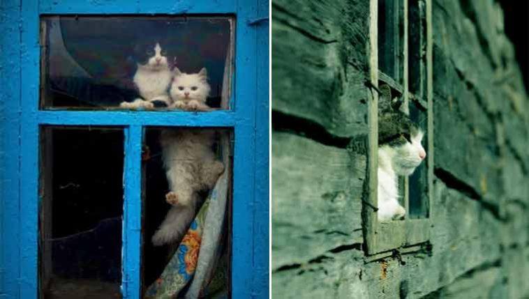 Fotos-de-gatinhos-na-janela