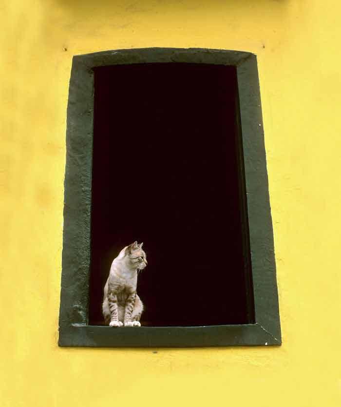 Fotos-de-gatinhos-na-janela-confira