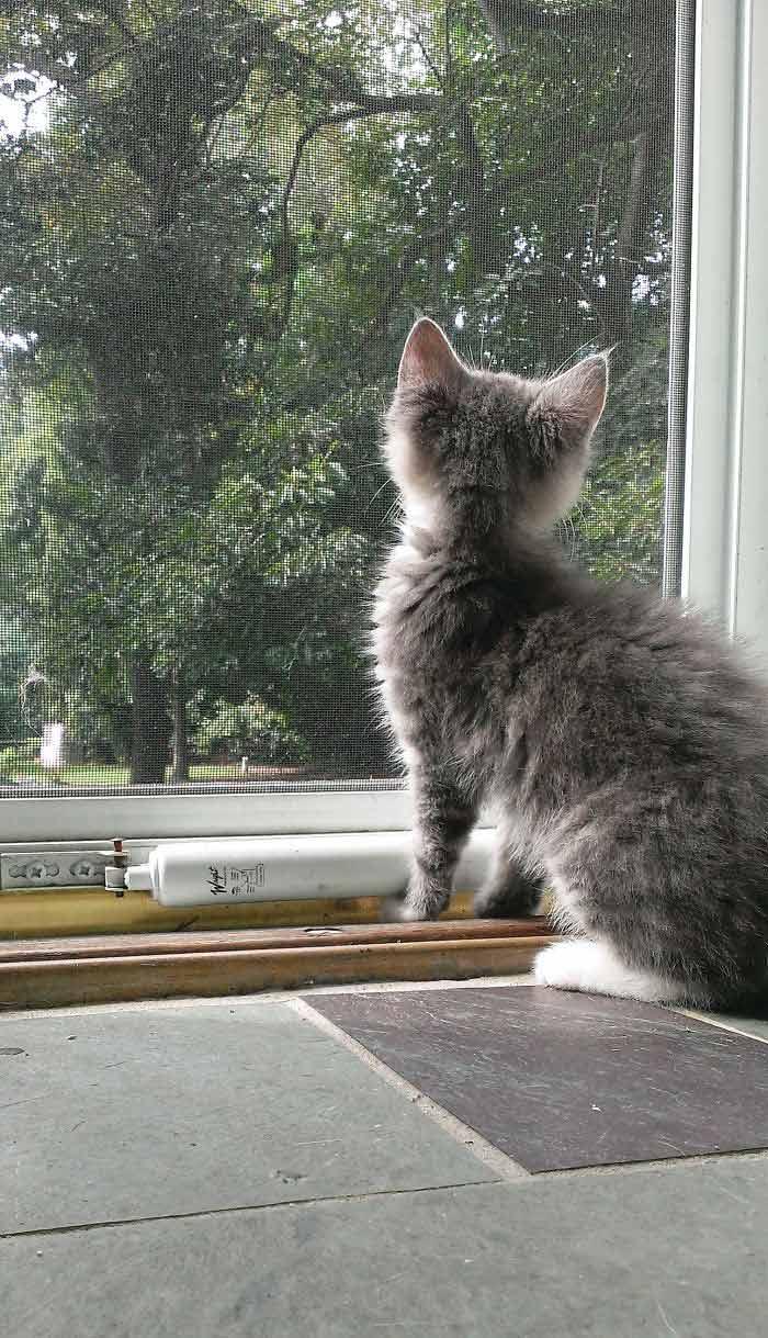 Fotos-de-gatinhos-na-janela-curiosidade