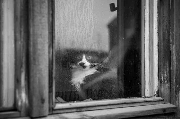 Fotos-de-gatinhos-na-janela-curiosidades-sobre-gato
