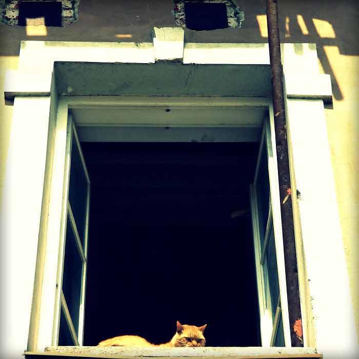 Fotos-de-gatinhos-na-janela-curiosidades-sobre-gatos
