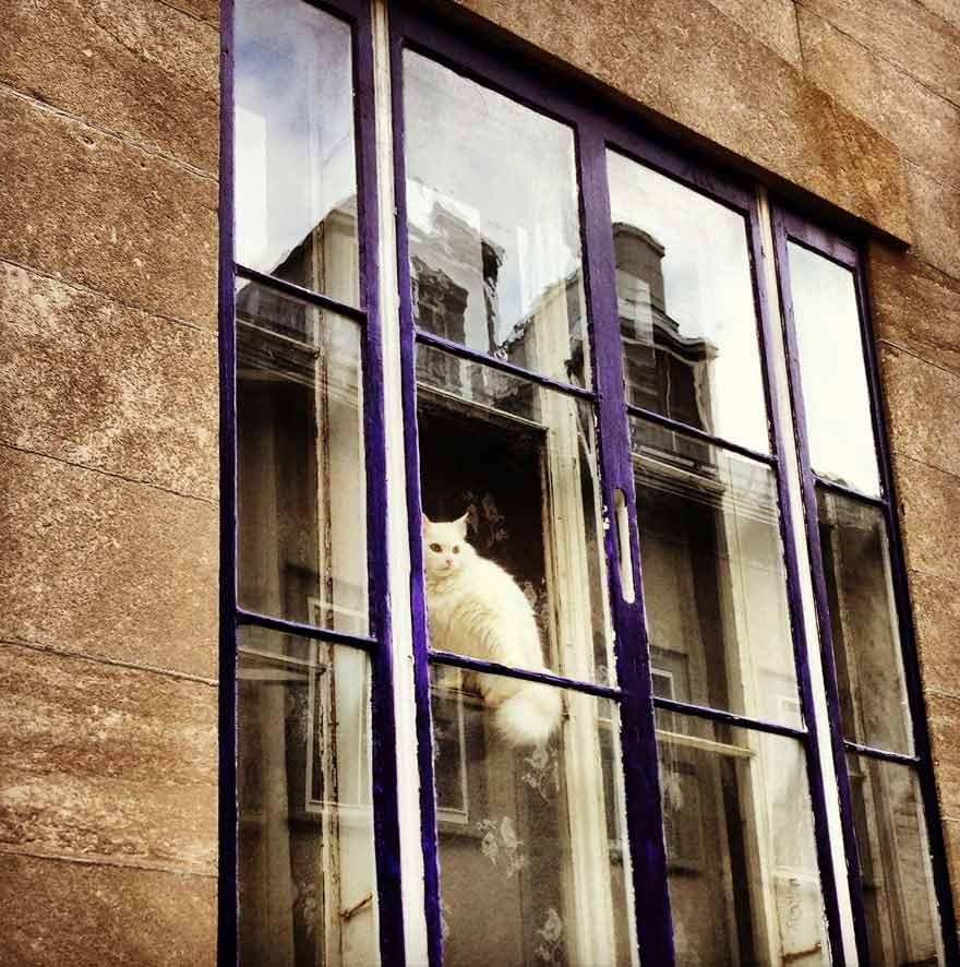 Fotos-de-gatinhos-na-janela-fofo