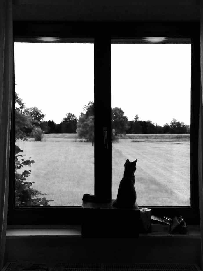 Fotos-de-gatinhos-na-janela-fofos