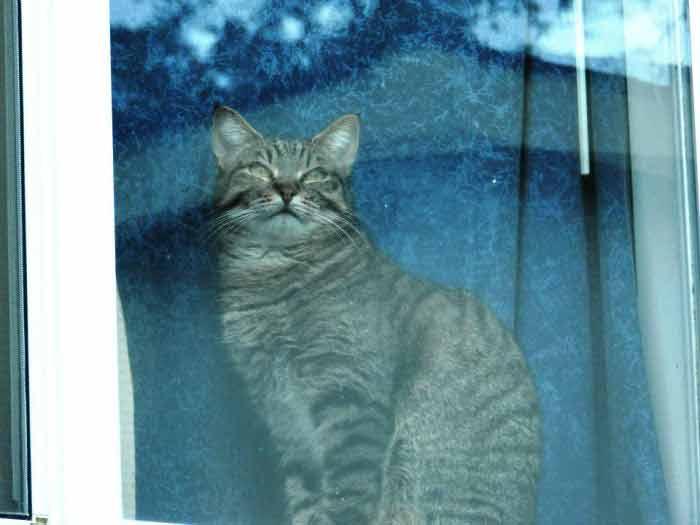 Fotos-de-gatinhos-na-janela-fotos-lindas