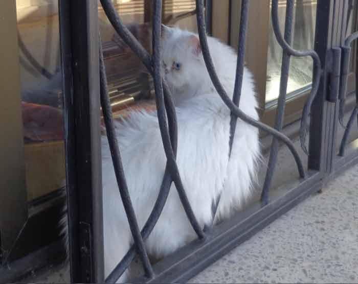 Fotos-de-gatinhos-na-janela-gato